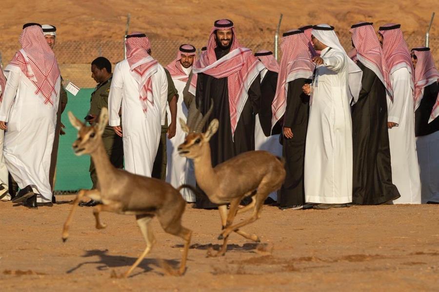 في يومها العالمي.. استعراض لأبرز جهود المملكة لحماية الأحياء البرية