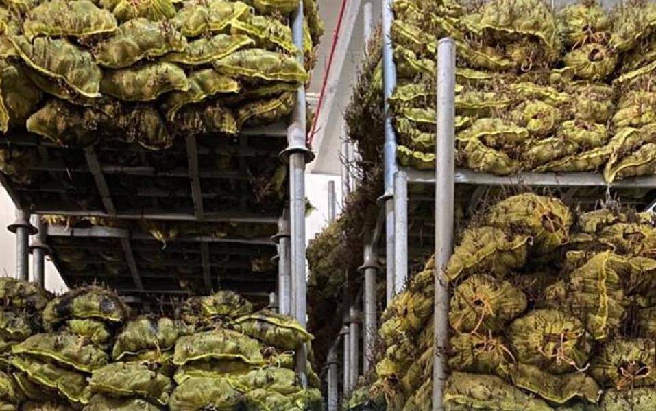 """""""الغذاء والدواء"""" تضبط مصنعًا يخزن مواد غذائية مخالفة"""