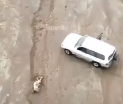 لحظة إنقاذ شخص جرفته السيول وحاصرته شمال ينبع