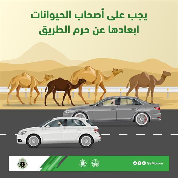 """""""المرور"""": إبعاد الحيوانات عن حرم الطريق من مسؤوليات مُلّاكها"""