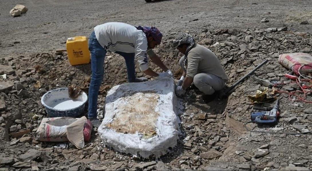 صور من مصر .. بقايا أسماك وزواحف تعود إلى عصر الديناصورات