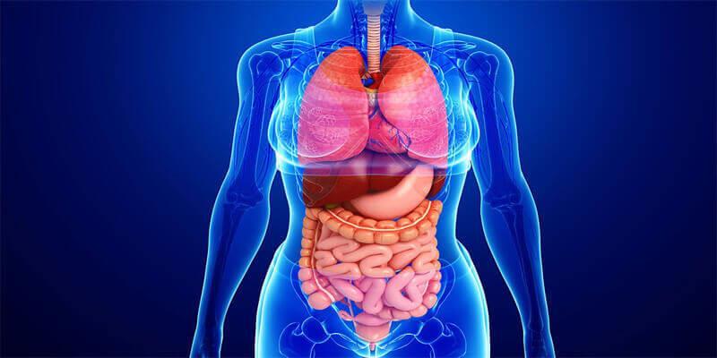 كم عدد الأعضاء في جسم الإنسان؟ عالمة أمريكية تجيب
