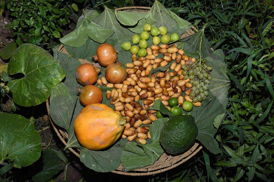 """""""الأحساء"""".. سلة الغذاء المتنوعة وواحة الفاكهة والخضراوات الصيفية"""