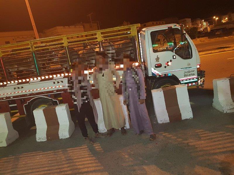 """بالصور.. ضبط باكستاني تورط في نقل 3 مخالفين و 14 حماراً بـ""""دِينَّا"""""""