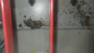 تم العثور على حيوان ميت يشبه الفأر بالقرب من لوحة التحكم في محطة فوكوشيما النووية اليابانية