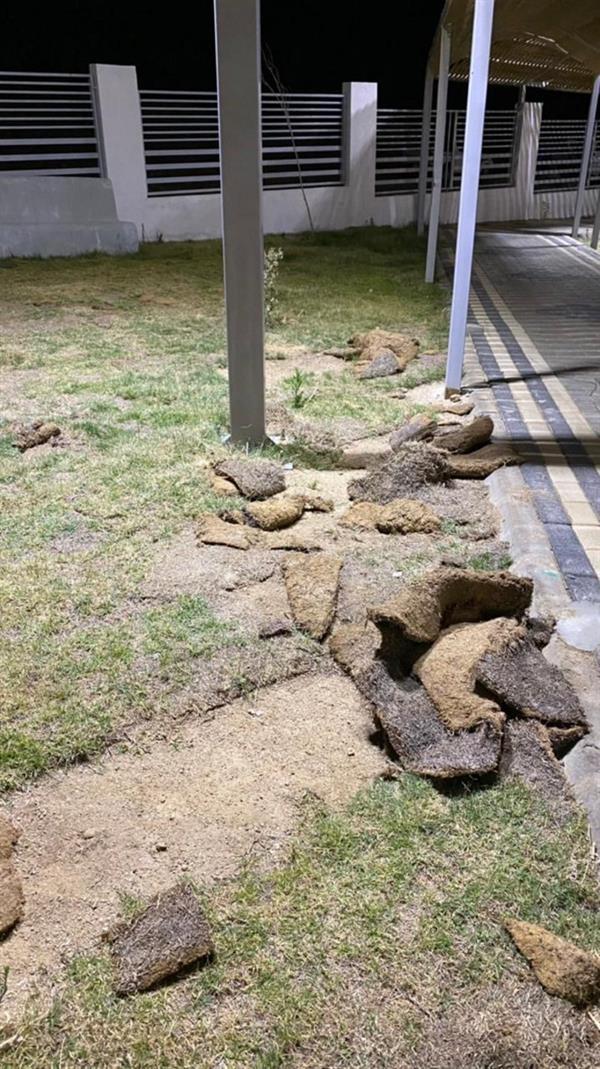 """قرود تسيطر على حديقة """"باشوت"""" في بلقرن بعد عام من افتتاحها"""