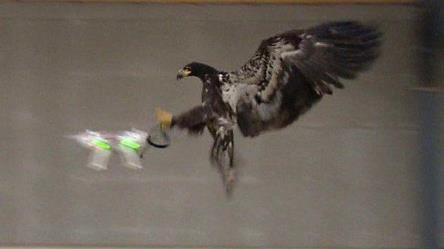 eagles catch drone