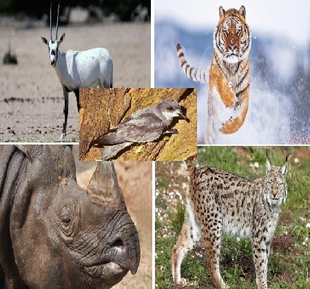 أخبار 24 5 حيوانات أحدها عربي كادت أن تنقرض لكن دولا بينها السعودية والأردن أنقذتها