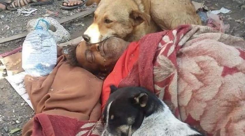 كلاب تحرس جثـة مشرد يمني عقب وفـاته في الشارع
