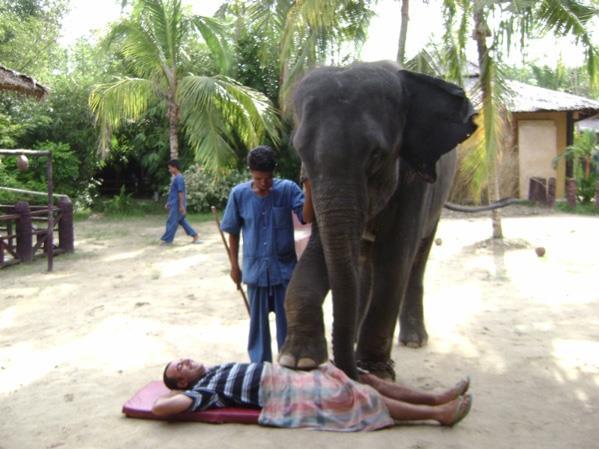 فيلة تايلند تقوم بعمل مساج للسياح