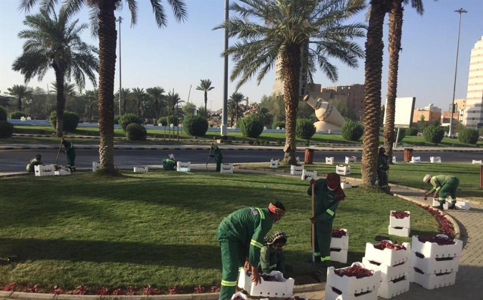 زراعة 55 ألف زهرة على طريق المسجد الحرام بمكة
