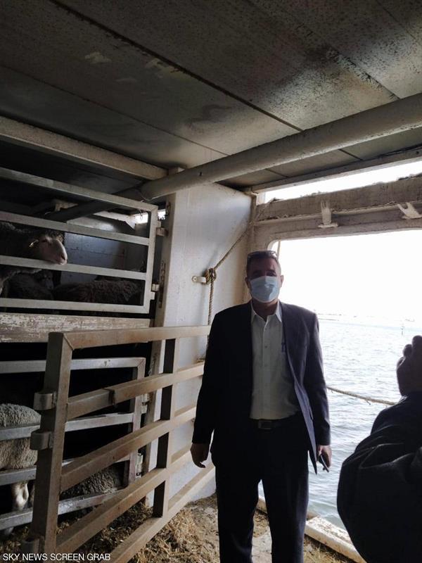 تفاصيل خاصة عن سفن قناة السويس محملة بالماشية
