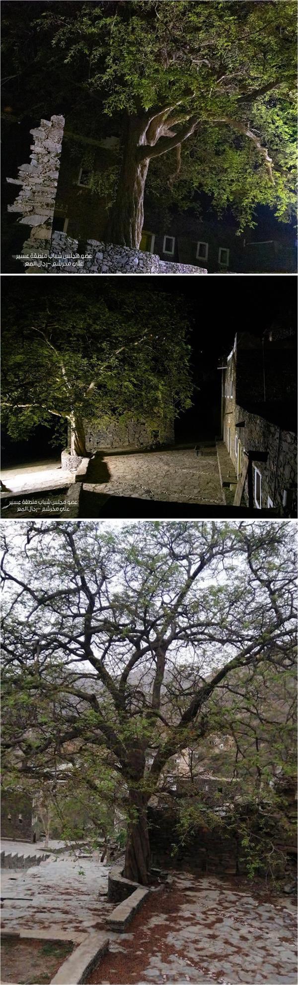 صور الشجرة