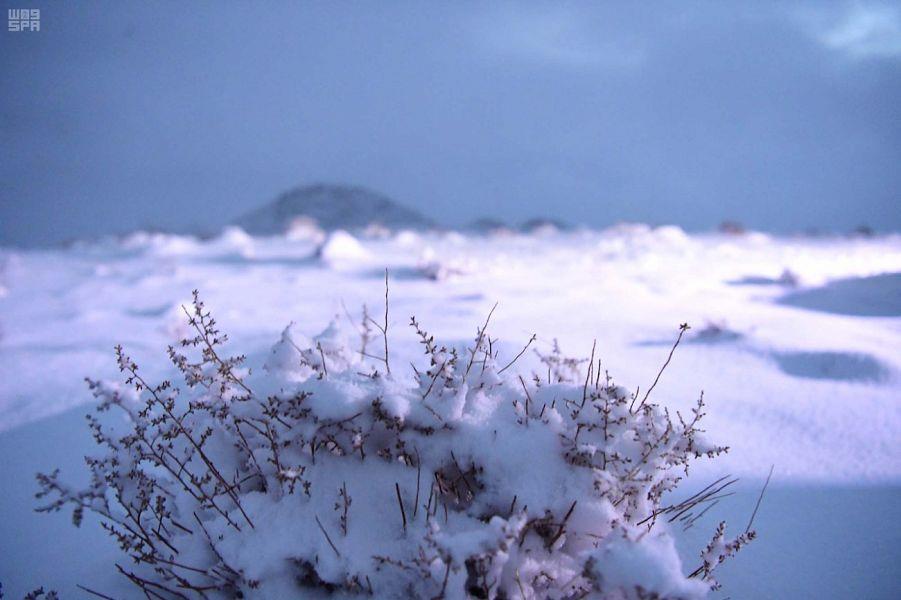 """""""الحصيني"""": هذه المناطق على موعد مع موجة البرد الأقوى في المملكة منذ دخول الشتاء"""