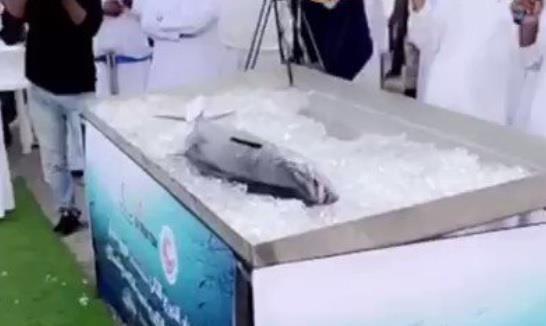 """بيع سمكة """"كنعد"""" بـ200 ألف درهم بالإمارات"""