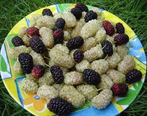 أخبار 24 | أهمها مكافحة السرطانات.. 11 فائدة صحية لتناول ثمار التوت