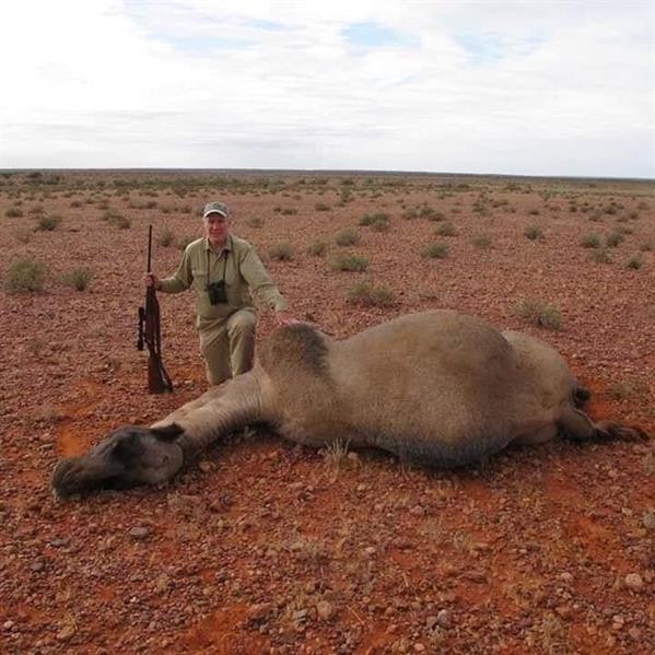 أستراليا تعدم 5 آلاف جمل بالاستعانة بقناصة من الجيش