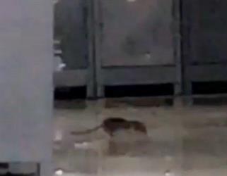 أخبار 24 جامعة الدمام تعلق على فيديو القوارض والحشرات وتؤكد إيقاف المتعهد