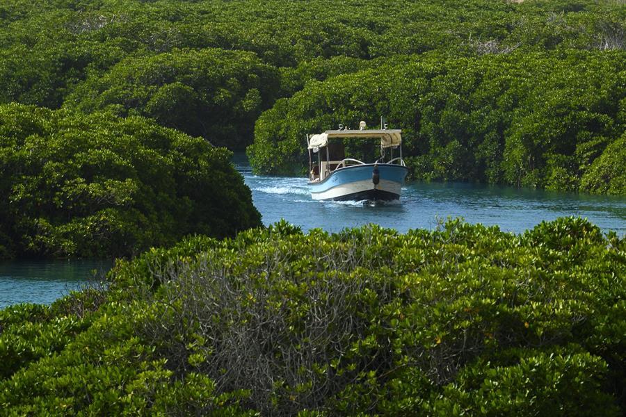"""وزير الثقافة: نعمل على تسجيل محمية """"جزر فرسان"""" في اليونسكو"""