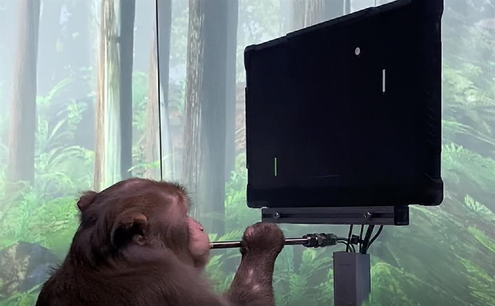 قرد يتحكم في لعبة إلكترونية بشريحة مزروعة في جمجمته