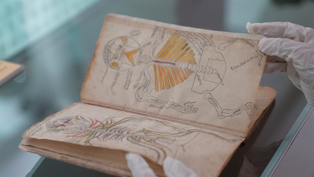 أول كتاب يشرح تركيب جسم الإنسان