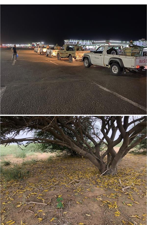 مكافحة الجراد الصحراوي بجهود استباقية في 3 مناطق