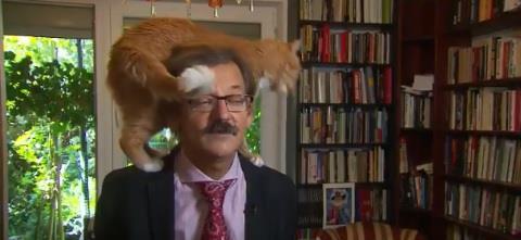 فيديو.. سياسي بولندي يفاجأ بقطته تقفز فوق رأسه في حوار له