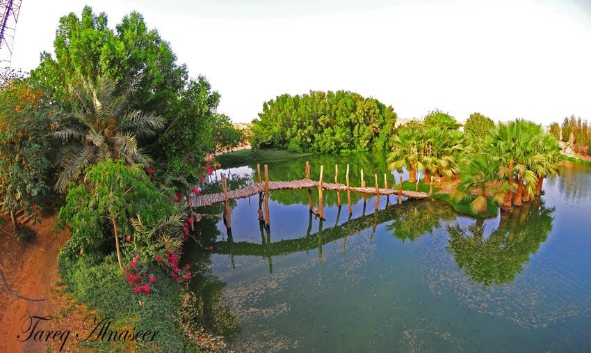 أخبار 24 | بالصور : بحيرة في إحدى مزارع القصيم