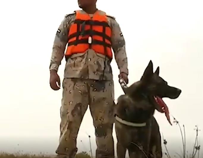 كلاب بوليسية سواعد رجال حرس الحدود لإنقاذ حياة الأشخاص في البر والبحر