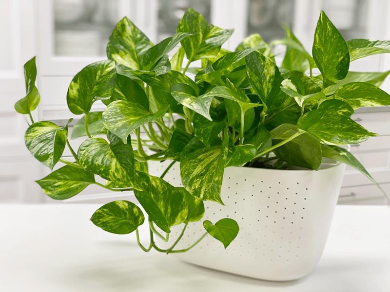 إضافة إلى جمالها.. فوائد صحية لنباتات الزينة داخل المنزل.. تعرف عليها