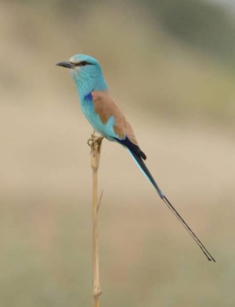7 أنواع نادرة من الطيور لا تعيش في مكان آخر سوى جازان