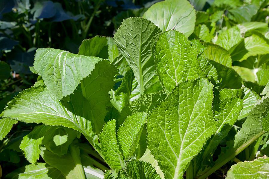 الخردل الأخضر: كل كوب منه يعادل 78 مليجرام من الفيتامين.