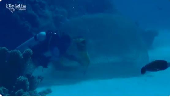 لحظة تحرير سمكة قرش عالقة في مصيدة قديمة بأعماق البحر الأحمر