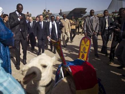 الجمل العربي هدية السلطات المالية للرئيس الفرنسي
