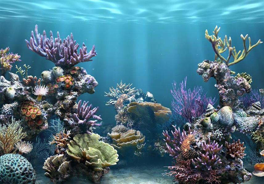 جرس الإنذار في يوم المحيطات .. البشرية مهددة بالشعاب المرجانية ونقص الأكسجين
