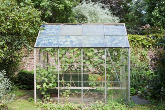 greenhouse-cleaning