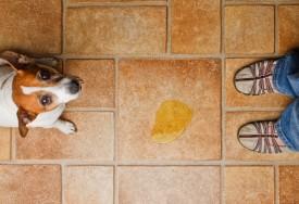 Лучшие средства для борьбы с запахом животных
