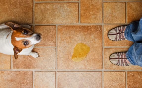 Удаление пятен мочи домашних животных с пола и мебели | Как избавиться от пятен собачьей мочи | Как избавиться от пятен кошачьей мочи на ковре