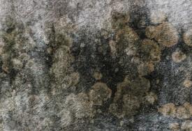 Как удалить плесень и плесневый грибок со стен?