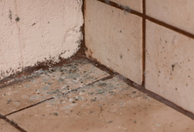 How to Remove Mould from Floors and Carpets
