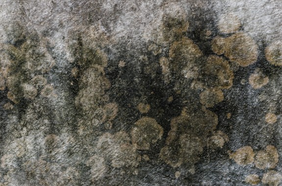 Remoção de mofo e bolor das paredes