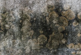 C mo eliminar el moho de las paredes cleanipedia - Como tratar la humedad en las paredes ...