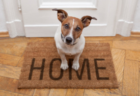How Do You Get Rid of 'Dog Smell' in Your Home?