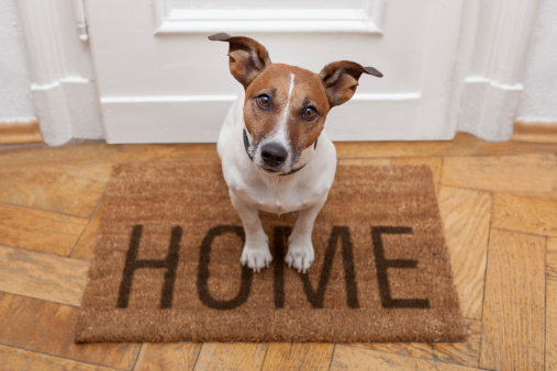 how to get rid of dog smell in your house cleanipedia
