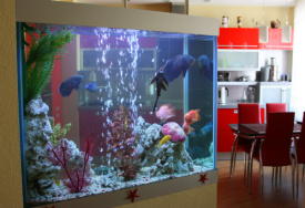 Cara membersihkan kaca aquarium
