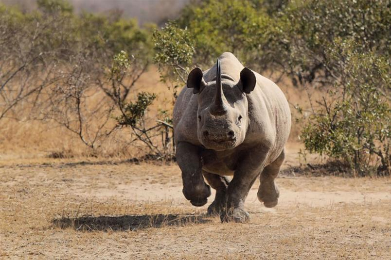 Do you live your life like a Rhino, or a Cow?