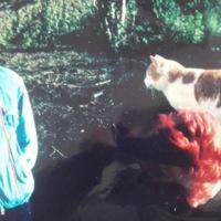 Donal Sheehan Garden Cork 1980s