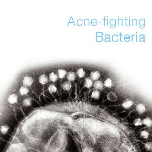acne-fighting bacteria