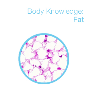 body knowledge: fat