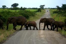 Uganda - Menschen, Tiere und Landschaften